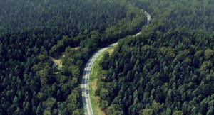 den-brooks-forest-art-vray-3ds-max